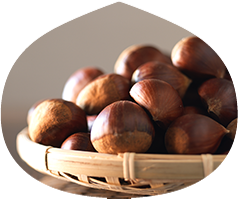 Chestnut Varieties and their characteristics